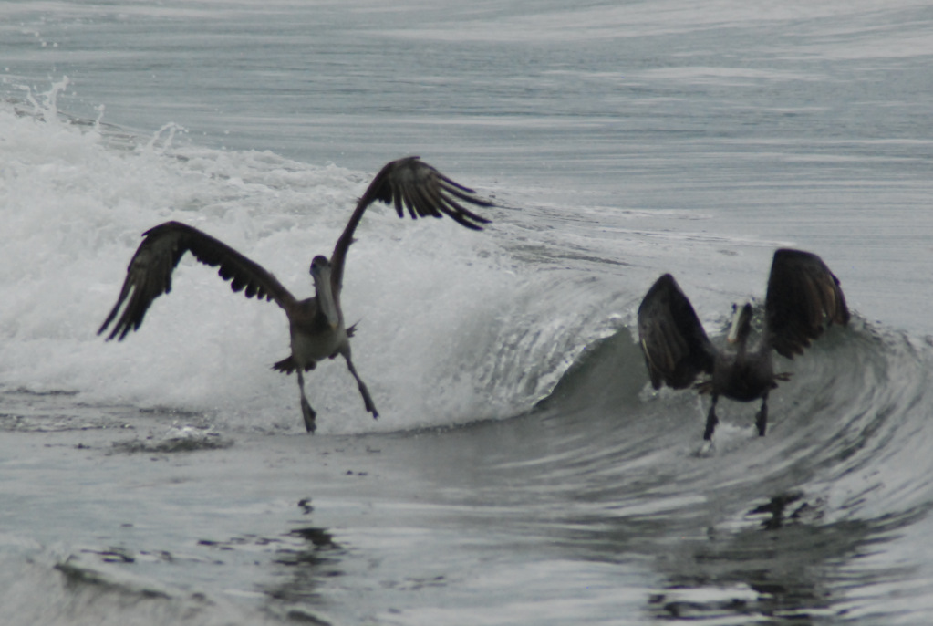 shooting birds in flight or motion!
