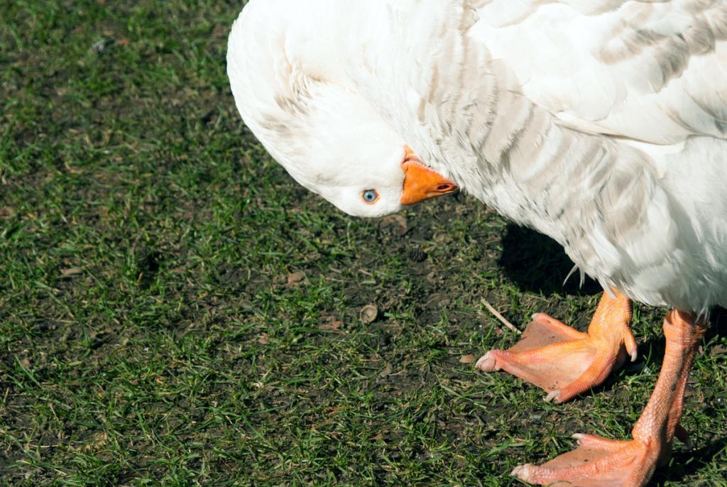 Bird Photography - White Birds