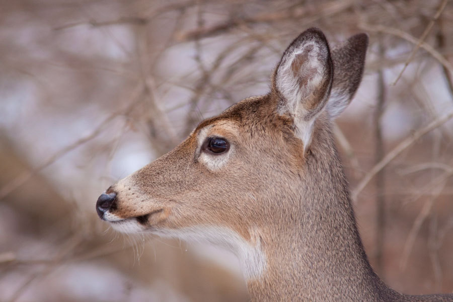 Last Deer Photo