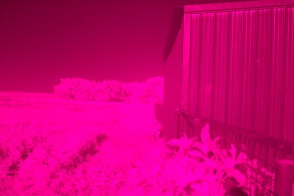 How to shoot Infrared with a Sigma SD14