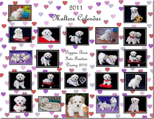 Maltese Calendar Cover